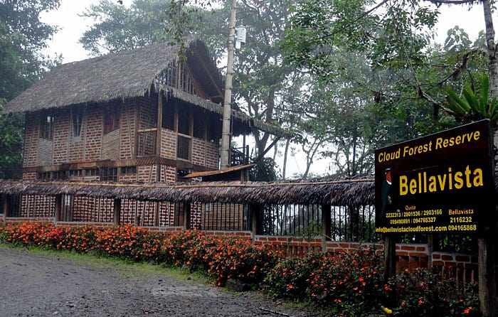 Bellavista Cloud Forest – a nature lovers and birdwatchers dream