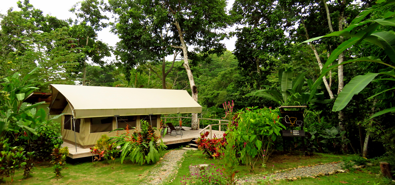 Canopy Camp
