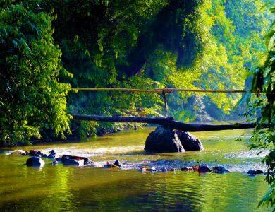 Blue magpie stream
