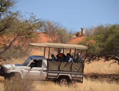 Kalahari Game Lodge - Safari