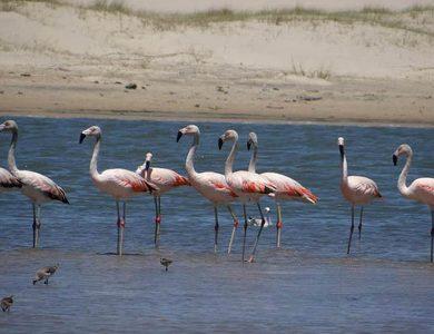 Pousada pousa alegre - flamingos