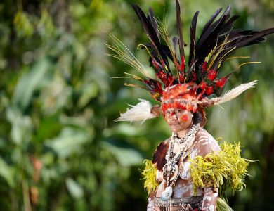 Women in traditional Mount Hagen style costume. They wear elaborate colorful head dresses of bird of paradise plumes. Avi Village in the Wahgi Valley, Papua New Guinea.