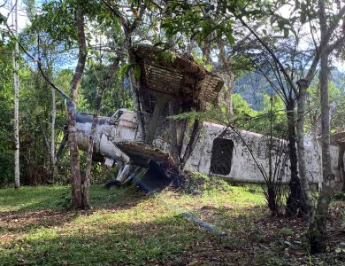 Old plane in the woods