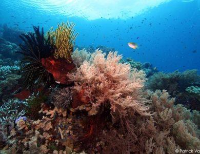 Weda Resort coral