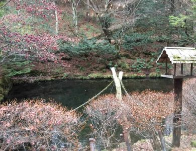 Shiotsubo Onson bird-feeder