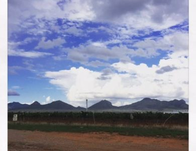 callaghan-vineyards