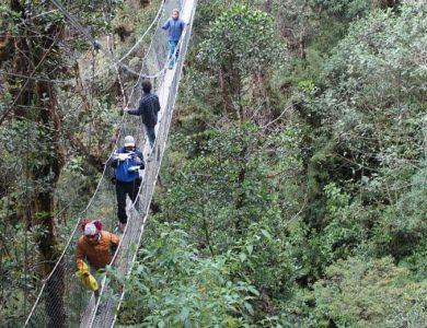 Wayqecha canopy-walkway