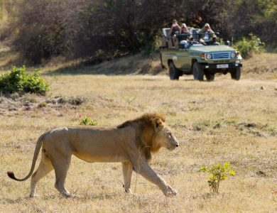 Flatdog camp - Game drives in open vehicles