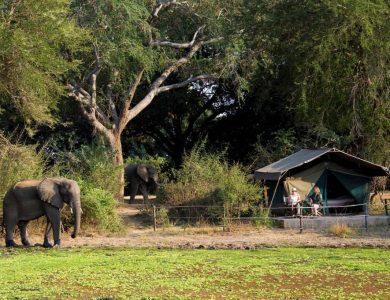Flatdog camp - Standard safari tent