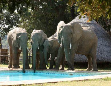 Flatdog camp - Swimming pool visitors