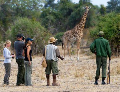Flatdog camp - Walking safaris