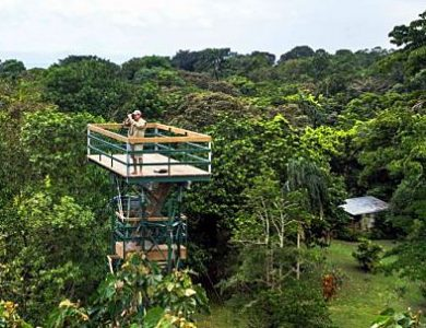 observation-tower-is-great-for-watching-parrots-and-other-birds-l