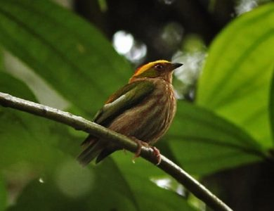 Over 500 species of Birds have been recorded in the area