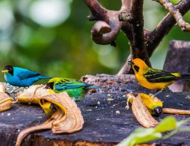 Copalinga bird-feeder