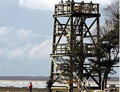 Tuulingu - Viewing Tower